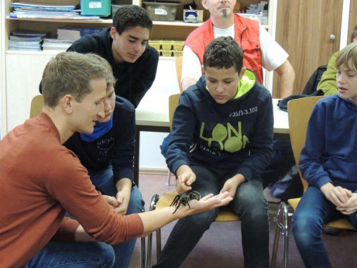 Tierbegegnungen gehören zum zoopädagogischen Konzept; Zoopädagoge David Mehlhase präsentiert Schülern die Kraushaarvogelspinne. (Foto: Zoo Landau)