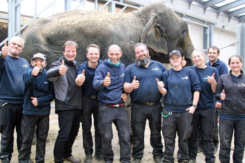 Zoodirektor Dr. Matthias Reinschmidt und das Team aus dem Dickhäuterhaus freut sich über die erfolgreiche Rettungsaktion (Foto: Zoo Frankfurt)