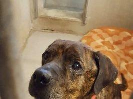 Hund Spike sucht neues Zuhause (Foto: Kreisverwaltung Rhein-Pfalz-Kreis)