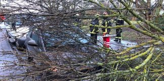 """Orkantief """"Burglind"""" hat auch in Landau Bäume entwurzelt und Äste abgerissen. Die Feuerwehr musste zu zahlreichen Einsätzen ausrücken. (Foto: Feuerwehr Landau)"""