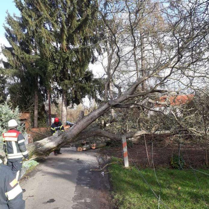 Umgestürzer Baum in Mainz-Kastel (Foto: Feuerwehr Wiesbaden)