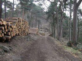 Verkaufsfertige Holzpolter am Waldparkplatz Hahnenschritt. Am kommenden Freitag kann man bei einer Holzerntevorführung erleben wie sie zustande kommen und warum der Waldbau überhaupt erforderlich ist. (Foto: J.Bramenkamp)