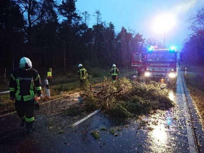 Einsatz für die Feuerwehr am frühen Morgen - L530 zwischen Haßloch und Geinsheim - Foto: Feuerwehr Haßloch