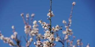 Die ersten Frühblüher wurden gesichtet. Werden sie der kommenden Kälte trotzen können? (Foto: Holger Knecht)