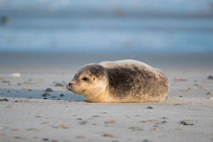 Programmpunkt der Nordseefreizeit mit dem Jugendtreff Horst ist auch der Besuch einer Seehund-Aufpäppelstation. (Foto: Pixabay)