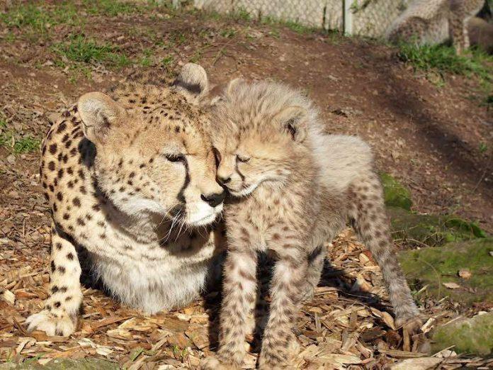 Foto: Zoo Landau