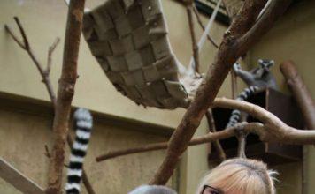 Revierleiterin Carina Decker mischte die Lostrommel und ließ sich von ihren Glücksfeen unterstützen. Die Kattas aus dem Exotenhaus ermittelten die Gewinner der Wunschboxaktion. (Foto: Freizeitbetriebe Worms)