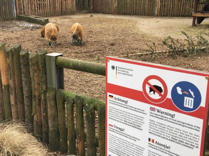 An den Gehegen der Minischweine, Pinselohrschweine und Mähnenschweine im Zoo Landau wurden zusätzlich Warn- und Hinweisschilder bezüglich eines Fütterungsverbotes angebracht. (Foto: Zoo Landau)