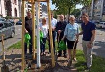 """Baumpflanzung zum """"Tag des Baumes"""" am Luisenring (Foto: Stadt Mannheim)"""