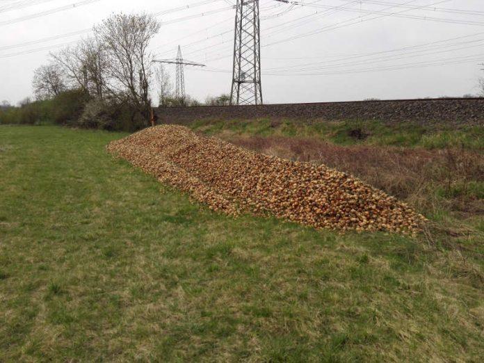 Illegale Ablagerung von mind. 25 Kubikmeter Zwiebelabfällen im Außenbereich von Herrnsheim an den Bahngleisen, südlich der Firma TST Worms am Langgewann. (Foto: Stadtverwaltung Worms)