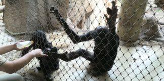 XHOSA wird am Netz gefüttert (Foto: Zoo Frankfurt)