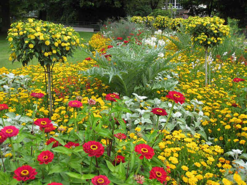 Sommerblumen für städtische Grünflächen pflanzt das Gartenbauamt ab sofort. (Foto: Stadt Karlsruhe)