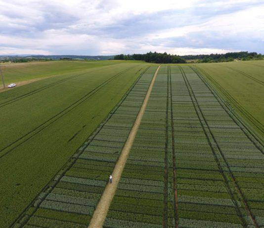 Luftaufnahme des Versuchsfeldes mit den einzelnen Versuchsparzellen (Foto: Landratsamt Karlsruhe)