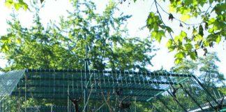 """Das Zooschulmaskottchen """"Dromi"""" begrüßt traditionell die Kinder am Zooeingang (Foto: Zoo Landau)"""