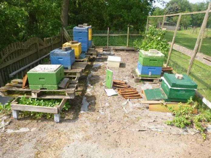 Die Bienenstöcke am Tatort