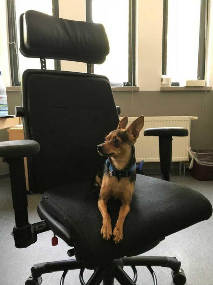 Foto des kleinen schwarz-braunen Hundes in der Polizeidienststelle