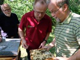 Imker Frank Mikley zeigt Förster Siegfried Weiter seine Bienenvölker. Sie haben viel Edel-Kastanien-Honig gesammelt (Foto: Landeforsten RLP/F. Mikley)