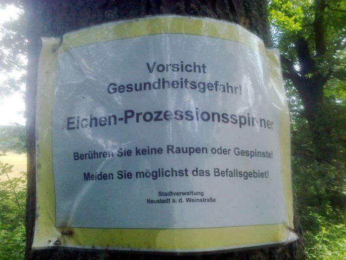Die Umweltabteilung warnt mit Hinweisen vor dem Kontakt mit den Raupen. (Foto: Stadtverwaltung Neustadt)