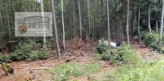 Der Pkw überschlug sich mehrfach und blieb schließlich 30 Meter abseits der Straße im Wald liegen.