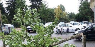 In der Eisenlohrstraße sägten Unbekannte einen jungen Baum ab. (Foto: Stadt Karlsruhe)