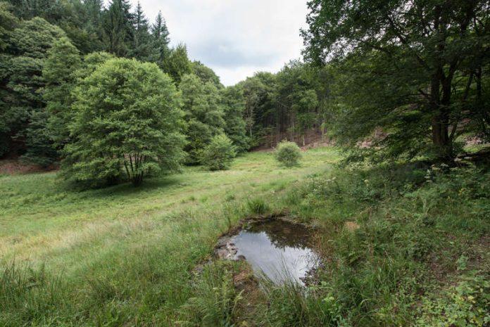 Biotop in der Nähe der Hirschquelle im Mühltal – zu wasserreicheren Zeiten. (Foto: Stadtwerke Heidelberg GmbH)