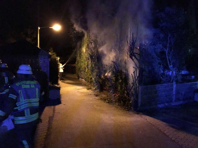Aus bisher ungeklärter Ursache war eine Thuja Hecke in Brand geraten. (Foto: Feuerwehr Dossenheim)