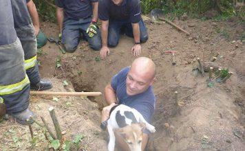 Der Jack-Russel-Terrier wurde gerettet (Foto: Stadtverwaltung Mainz)