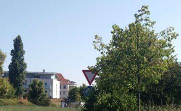 Wegen den Sichtbehinderungen werden Sträucher gerodet (Foto: Stadt Speyer)