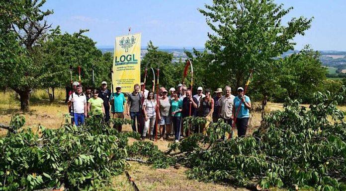 Der LEV Rhein-Neckar hatte zum Baumschnittkurs in Sinsheim-Weiler eingeladen (Foto: LEV RN)