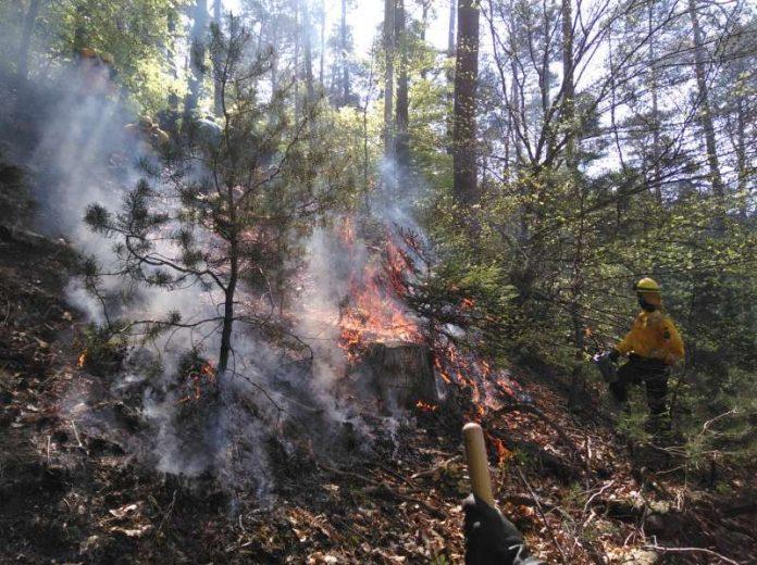 Gerade bei extremer Trockenheit ist die Waldbrandgefahr auch im Pfälzerwald sehr hoch. (Foto: Kreisverwaltung Südliche Weinstraße)