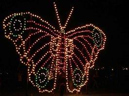 Ein Motiv beim diesjährigen Lichterfest im Zoologischen Stadtgarten (Foto: Zoo Karlsruhe/Timo Deible)