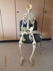 Skelettmodell