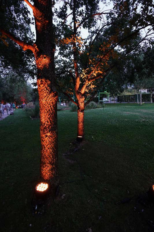 Illuminierte Bäume