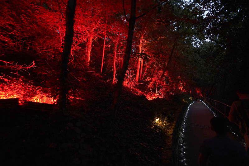 Der illuminierte Weg zum Kaiserberg