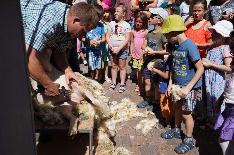 Schafscheren
