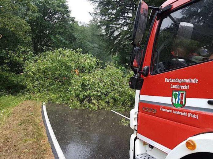 Umgestürzter Baum (Foto: Presseteam der Feuerwehr VG Lambrecht)