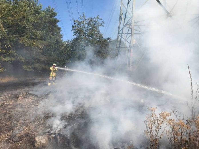 Waldlichtung in Flammen
