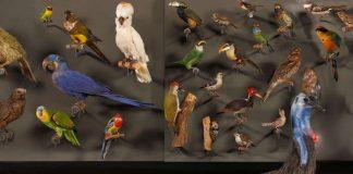 Ara, Kasuar und Co. Tropenwald-Vögel aus der Biodiversitätswand des HLMD (Foto: Wolfgang Fuhrmannek, HLMD)