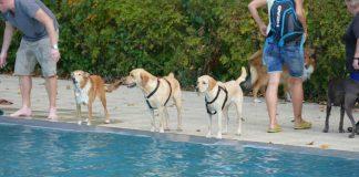 Hundeschwimmtag (Foto: Mainzer Stadtwerke AG)