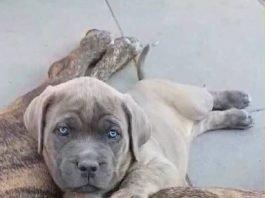 Der dritte der vermissten Hunde (Foto: privat)