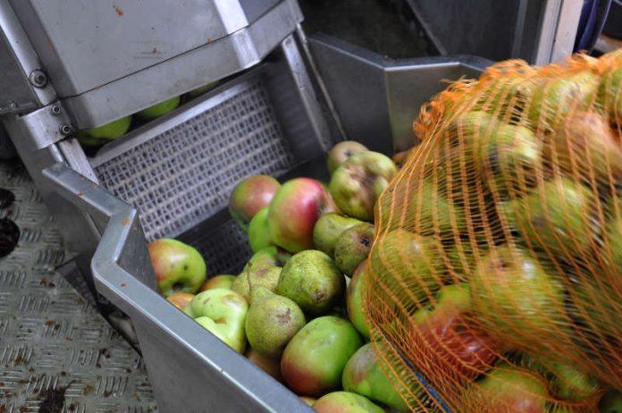 Obst wird in der mobilen Kelter zu Saft verarbeitet. (Foto: Michael Walter)