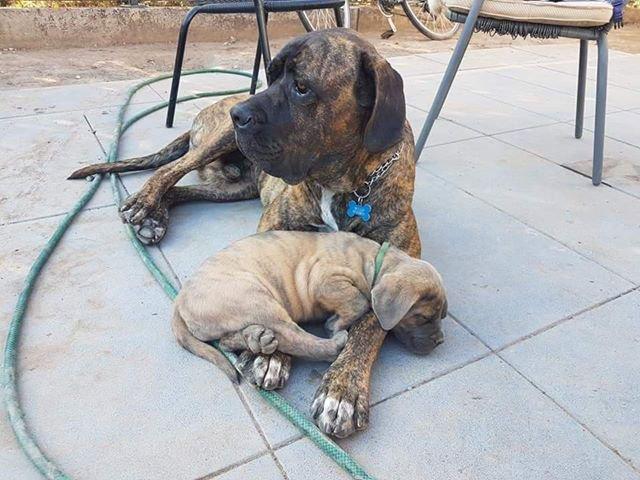 Die entwendeten Hunde (Foto: privat)