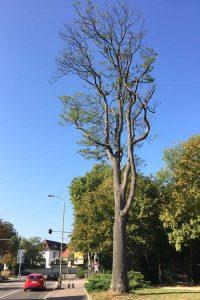 Dieser Baum muss gefällt werden
