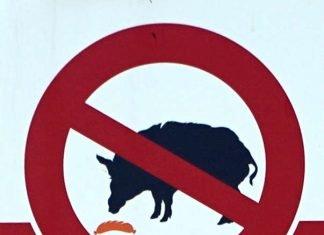 Symbolbild Afrikanische Schweinepest