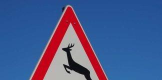 Symbolbild Wildwechsel (Foto: Pixabay)