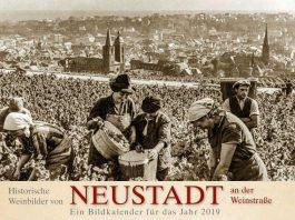 Weinlese am Sonnenweg über der Stadt (Quelle: Stadtverwaltung Neustadt)