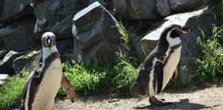 Quelle: Zoo Landau