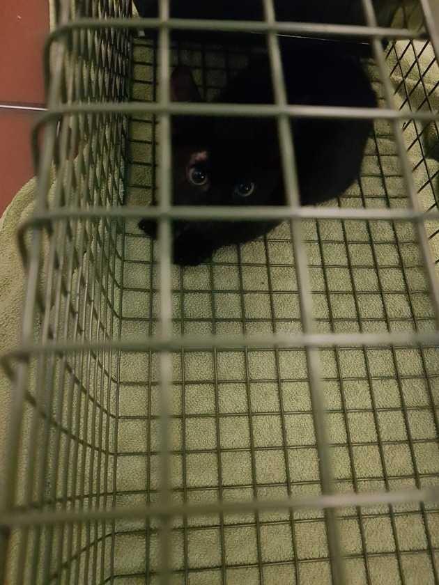 Nach einer 3-tägigen Rettungsaktion konnten die Beiden eingefangen werden