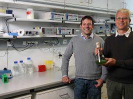 Juniorprofessor Dr. Felix Willmund (links) und Professor Dr. Michael Schroda
