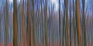 """Klaus Eppeles neue Fotoausstellung """"waldreich"""" bringt den Karlsruher Wald auf großen Leinwänden direkt in die Waldstraße in Karlsruhe zu Donato Hair Creations (Foto: Klaus Eppele)"""